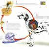 Campaña de vacunación de la Filariosis canina o Gusano del corazón