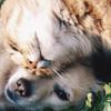 Campaña esterilización gatos y perros