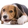 La limpieza dental canina es muy importante