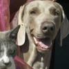Campaña Esterilización Perros y gatos