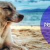 5ª Campaña de prevención de Leishmania
