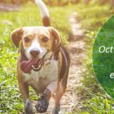 Campaña Esterilización Perros y Gatos 2019