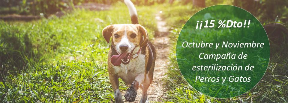 15% Dto. Campaña de Esterilización de Perros y Gatos ¡¡¡REGALO!!!un saco de pienso. Unidades limitadas