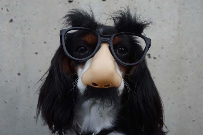 Yo soy un perro serio y no me disfrazo de calabaza..