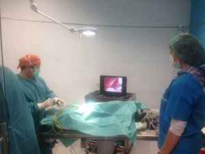 Cirugia canina castellon