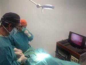 Cirugia esterilizacion perros