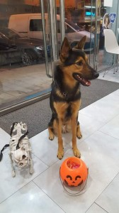 Vetfaunia veterinarios